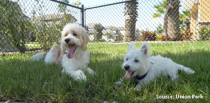 two dogs in dog park
